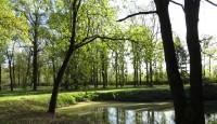 Camminare nel verde